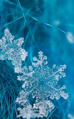 blue snowflakes on tree branch I Love Winter, Winter Time, Winter Photography, Nature Photography, Snowflake Photography, Photography Tips, Foto Macro, Ice Crystals, Winter Wallpaper