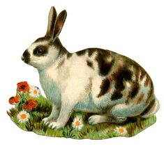 Animal Clip Art - Spotted Bunny - The Graphics Fairy