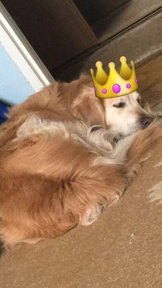Mój najukochańszy pies, dzięki któremu każdy dzień jest GLORY DAY :D