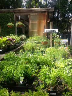 Garden Gate Nursery Gainesville Google Search 2406 Nw 43rd St