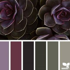today's inspiration image for { succulent tones } is by @traceybolton ... thank you, Tracey, for another incredible #SeedsColor image share!