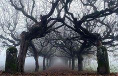 Historia drzew (3)