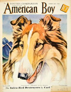 1936 Cover American Boy Art Paul Bransom Collie Hide Rack Dog Pet Animal Canine #vintage #lassie #collie