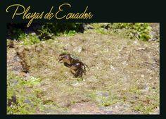 Playas de Ecuador travel trips aventura  #viajes #Ecuador #turismo #playas