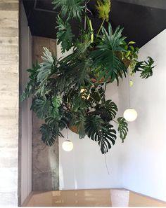 Fantasy House, Office Plants, Beer Garden, Ginger Beer, Table Flowers, Plant Decor, Flower Wall, Indoor Garden, Green Leaves