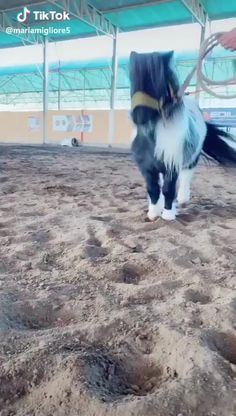Funny Horse Videos, Funny Horse Memes, Funny Horse Pictures, Funny Animal Jokes, Funny Horses, Cute Horses, Horse Photos, Horse Love, Funny Animal Videos