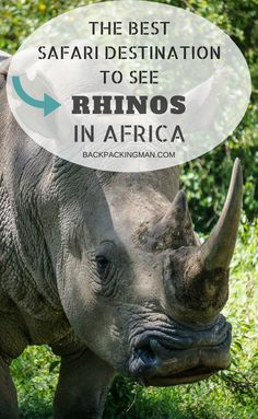 Kenya travel | Lake Nakuru National Park could be the best place to spot rhinos on safari in Africa. I have been on many safaris all over the continent and this was by far the best place for it. #Kenya #safari #rhino #Africa #animals