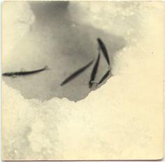FIFTY ONE Fine Art Photography Gallery - Artists A Box of Ku