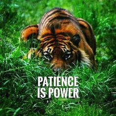 Patience quotes and sayings TOP PATIENCE quotes and sayings : Patience is power. Tiger Quotes, Motivacional Quotes, Lion Quotes, Boss Quotes, Strong Quotes, Attitude Quotes, Wisdom Quotes, Great Quotes, Qoutes