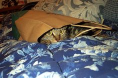 The Cat's in the Bag, via Flickr.