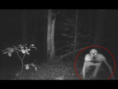 Top 5 Unexplained Beings Caught on Tape