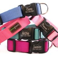 Personalized Engraved Buckle Dog Collar *18 colors