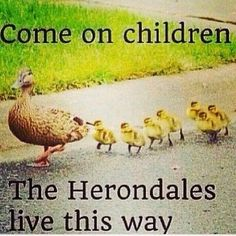 HAH go scare them you ducks