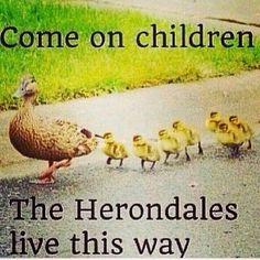 Image via We Heart It https://weheartit.com/entry/160243936/via/31166639 #ducks #funny #themortalinstruments #jaceherondale #herondales