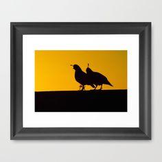 #Quail at #Sunset Framed Art Print