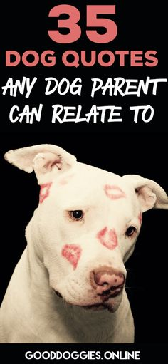 Check out these heart warming dog quotes any dog Mom or dad will relate to. Dog love quotes, dog laughs and more. #dog #quotes