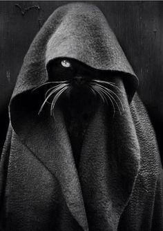 Obi Won Kitty Cat