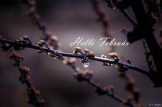 helló február