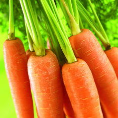 Health Benefits of Carrot for Babies - ParentingHealthyBabies.com