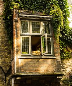havingahappyday: Dog in a window