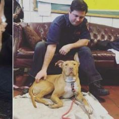Pit Bull Rescued from Crack House Finds New Home in Firehouse  http://a.msn.com/r/2/AAneIae