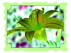 A very elegant digital creation to showcase one in a series of five beautiful abstract tropical lily images, each one with an attractive border to create something both unique and very decorative. All five art pieces work well together, so will look fabulous in groupings of your choice. Choose a single art piece, your favorite pair, a grouping of  three, a collection of four or hang all five together to create your own elegant art show.