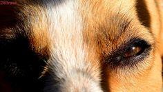 Cão fica dias preso sem água nem comida em Glória de Dourados
