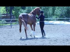 Now is not the time to risk a fall off a horse. Here are some exercises riders can do with their horses from the ground instead. Dressage Videos, Horse Exercises, Horses, Animals, Fall, Youtube, Autumn, Animales, Animaux