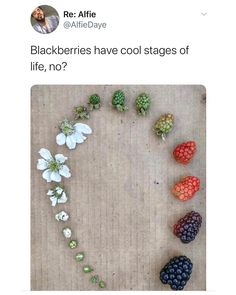Stupid Funny, Funny Cute, Weird Facts, Fun Facts, Best Memes, Funny Memes, Cool Pictures, Funny Pictures, Learn Something New Everyday