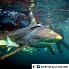 20 Likes, 0 Comments - Dirty Boots Durban South Africa, Shark Diving, Ocean Sounds, Kwazulu Natal, Tropical Forest, Adventure Activities, Nature Reserve, Good Day, Shark Cage