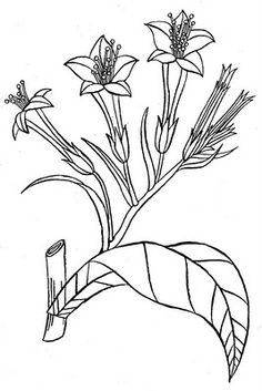 Thinking about getting a tattoo of Carson Ellis' art...maybe flowers?