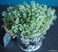 Idées déco : étagères végétales Herbs, Sweet, Plants, Diy Room Decor, Candy, Herb, Flora, Plant, Spice