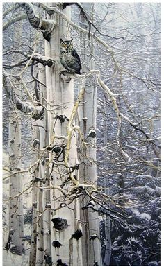 Owl in snowy aspens; Winter Wood Shades /  Flickr  by Plum leaves