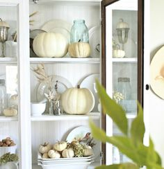 white pumpkins in hutch