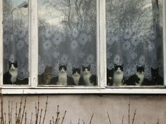 """""""If you know how many cats you have, you don't have enough."""" -- Anonymous (for good reason)"""
