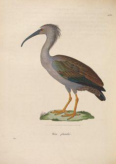 Nouveau recueil de planches coloriées d'oiseaux :. A Strasbourgh ;Chez Legras Imbert et Comp.,1838.