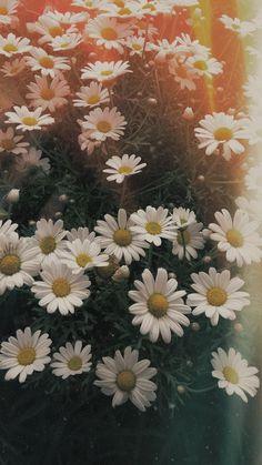 Little Mix Wallpaper Daisy Wallpaper, Sunflower Wallpaper, Cute Wallpaper Backgrounds, Tumblr Wallpaper, Flower Backgrounds, Aesthetic Iphone Wallpaper, Cute Wallpapers, Aesthetic Wallpapers, Amazing Flowers