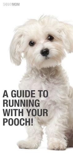 Tips for running with your pup! This looks so much like our Sammy! I Love Dogs, Puppy Love, Cute Dogs, Biewer Yorkie, Skinny Mom, Cool Haircuts, Dogs Of The World, Dog Training Tips, Dogs And Puppies
