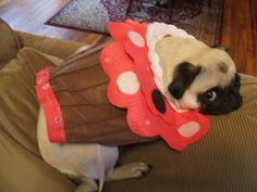 Cupcake Dog Costume!