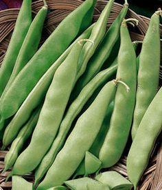 Bean, Early Bush Italian,