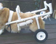 dog cart for handicap dogs