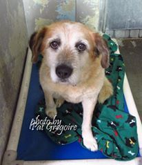 A3176121 I am a very sweet and friendly 12 yr old neutered male white/brown Terrier mix. My family left me here on April 4. available now. (39.5 lbs) Baldwin Park shelter https://www.facebook.com/photo.php?fbid=952443338100837&set=a.705235432821630&type=3&theater