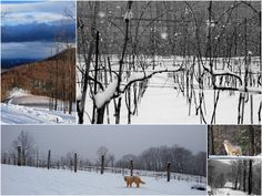 Photos for Ankida Ridge Vineyards | Yelp