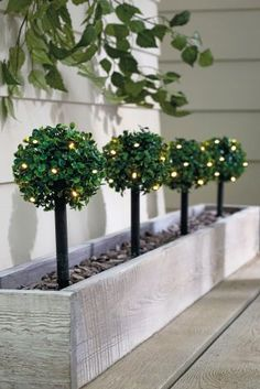 They look like they should be big, but they're actually miniature! These will look SO cute in your garden this summer! Cute Home Decor, Garden Landscaping, Landscaping Ideas, Green Garden, Back Gardens, Topiary, Next Uk, Uk Online, The Great Outdoors