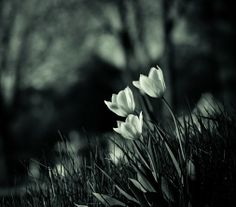 Rachael Alexandra - Google+ - A little afternoon delight of the tulip variety for ya'll :)