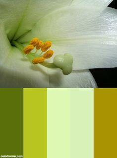 Inside Color Scheme