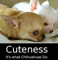 Cuteness                                                                                                                                                                                 More