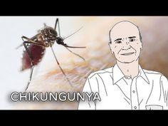 Alerta: Chikungunya