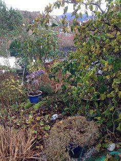 """Fall in my garden """"Margeritten"""" 14.11.2014 by IJ"""