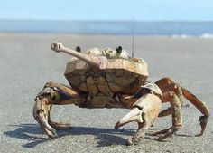 Canon Crab